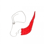 Mon chéri - Sélection 2011